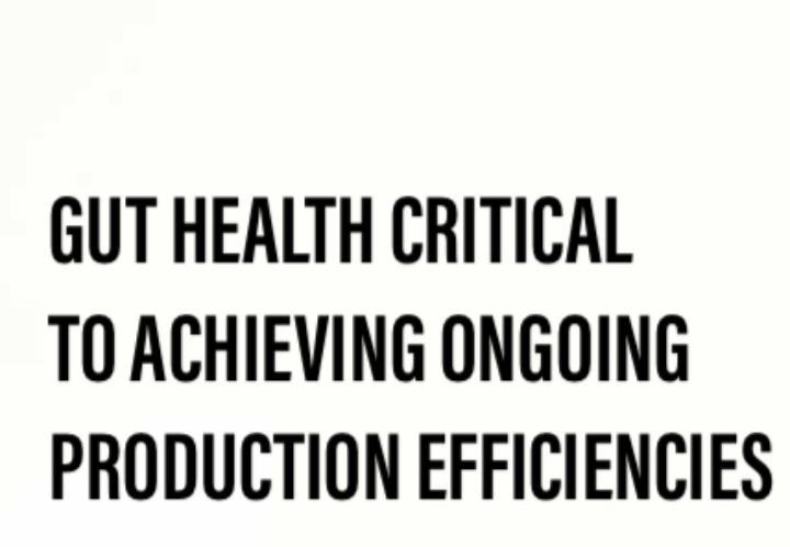 Gut health critical to achieving ongoing production efficiencies